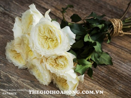 David Austin – ông vua của hoa hồng (4)