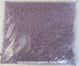Giúp hồng leo bông to và lâu tàn bằng phân tím Đức