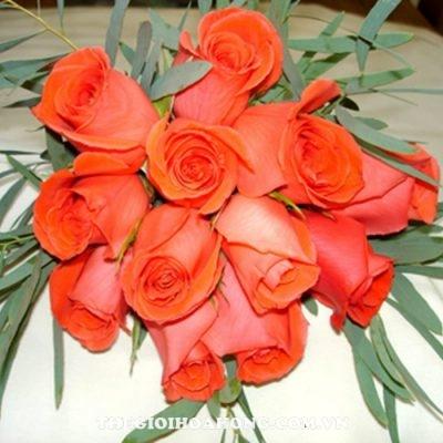 Hoa hồng bụi Movie Star
