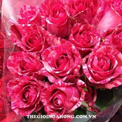 Hoa hồng bụi Pink Intuition