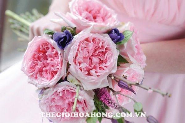 Cách cắt tỉa hoa hồng David Austin (1)