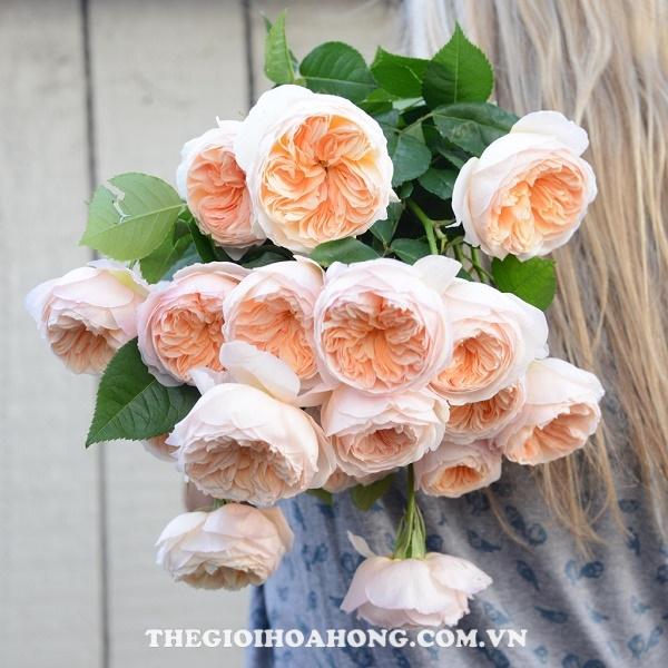 Cách bó hoa hồng leo làm hoa cưới