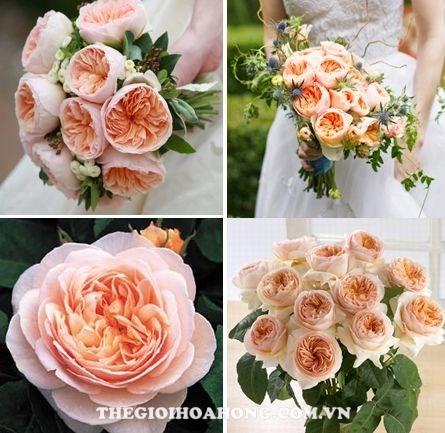 Cách bó hoa hồng leo thành hoa cưới