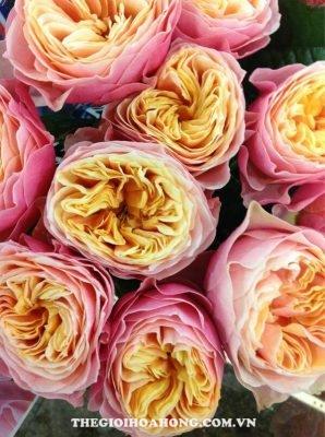Hoa hồng Vuvuzela (1)
