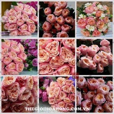 Hoa hồng Vuvuzela (2)