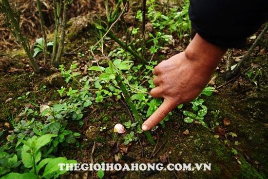 Kinh nghiệm trồng hoa hồng leo cho hoa quanh năm ai cũng muốn biết (2)